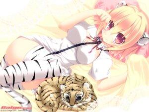 Rating: Safe Score: 45 Tags: animal_ears galge.com nekomimi tail tajima_yoshikazu thighhighs wallpaper User: alimilena