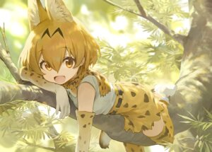 Rating: Safe Score: 15 Tags: animal_ears kemono_friends mossi serval tail thighhighs User: Dreista