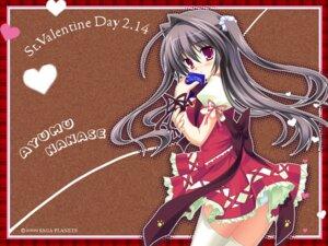 Rating: Safe Score: 21 Tags: kozakura_ryou nanase_ayumu natsu_yume_nagisa pantsu thighhighs valentine wallpaper User: charunetra