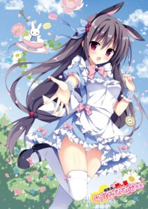 Rating: Questionable Score: 65 Tags: animal_ears bunny_ears cameltoe dress heels izumi_nanase melonbooks pantsu tagme thighhighs User: Twinsenzw