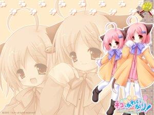Rating: Safe Score: 13 Tags: animal_ears natsume_eri neko_kawaii_gari! nekomimi wallpaper User: boon