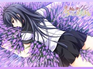Rating: Safe Score: 29 Tags: alpha kourin_no_machi_lavender_no_shoujo sakuragi_hikaru seifuku wallpaper User: aiur