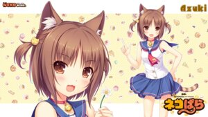 Rating: Safe Score: 38 Tags: animal_ears azuki neko_para neko_works nekomimi sayori seifuku tail wallpaper User: ted423